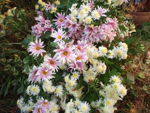 庭の花 049.JPG