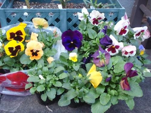 庭の花 055.JPG