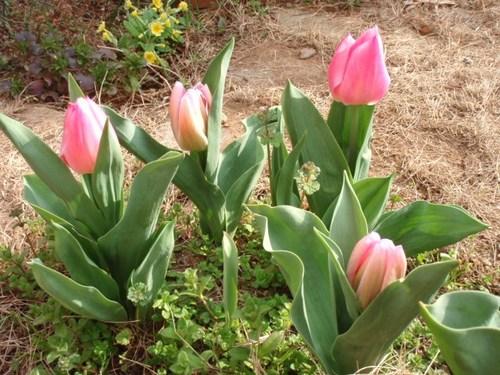 庭の花 062.JPG